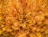 Floral Pattern DSCF11049
