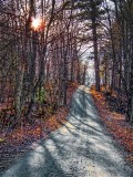 Back Road Shadows DSCF11526-8