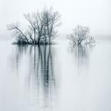 Reflected Trees Against Fog DSCF11766-8