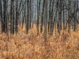 Late Autumn Woods DSCF11745-7