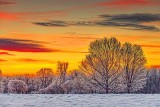 Frosty Sunrise 40161-2
