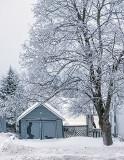 Iced Tree 20131223