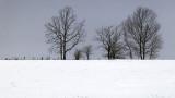 Snowscape 20140117