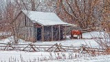 Rustic Horse Shed In Snowfall 20140119