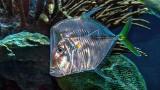 Iridescent Fish 4394