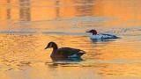 Sunrise Birds 20140327