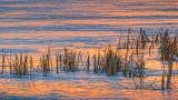 River Grass At Sunrise P1010881-3