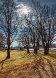 Spring Sunlight P1020210.12