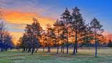 Pines In Sunrise 20140508