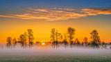 Sunrise Trees In Mist 20140525