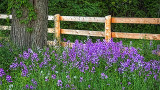 Fence & Flowers 20140530