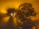Trees In Foggy Sunrise P1040478-80