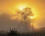 Trees In Foggy Sunrise P1040474