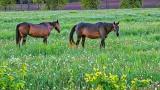 Equine Pals P1040614