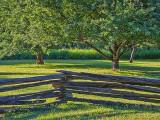 Apple Trees & Fence P1050233-5