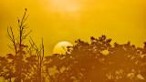 Foggy Sunrise 20140616