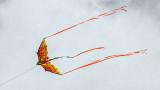 Flying High P1060258