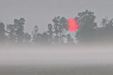 Foggy Sunrise P1060561-3