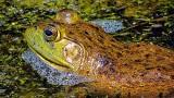 Foamy Frog DSCF16762-4