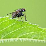 One Ugly Bug DSCF16665
