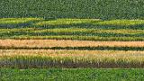 Experimental Farm Field DSCF17631