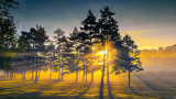 Pines In Misty Sunrise P1090205-7
