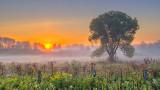 Lone Tree In Misty Sunrise P1090115-7