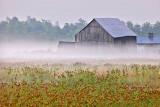 Barn In Mist P1060537-9