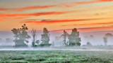 Trees In Misty Sunrise 20140904