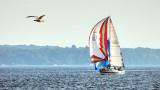 Gull & Sailboat P1090315