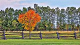Autumn In Summer  P1100019-21