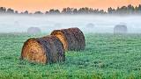 Bales In Misty Sunrise 20140917