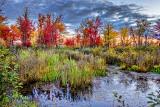 Autumn Marsh 20140918