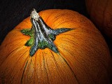 Pumpkin P1100337