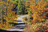 Autumn Back Road P1100499-501