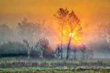 Foggy Sunrise 20140928