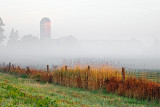 Foggy Farm P1100997