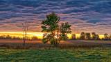 Tree In Clouded Sunrise P1000242