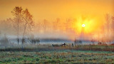 Foggy Sunrise P1100986,8