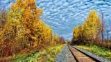 Autumn Tracks P1010359