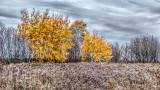 Autumn Bushes 20141020