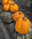 Pumpkins In A Row P1110281