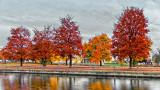 Autumn Victoria Park 20141029