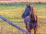 New Equine Pal At Sunrise P1020463-5