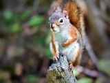 Stumped Squirrel P1000016