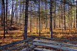 Autumn Landscape DSCF00213
