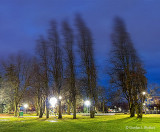 Wind In Confederation Park P1040694-709