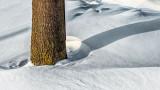 Shadow On Snow P1060507