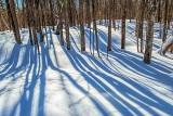 Winter Shadows P1110387-9
