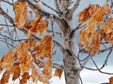 Last Year's Leaves P1090579